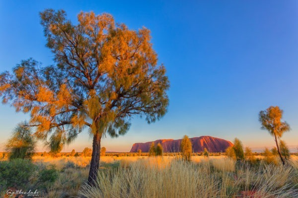 first light sunrise uluru tree nt landscape photograph