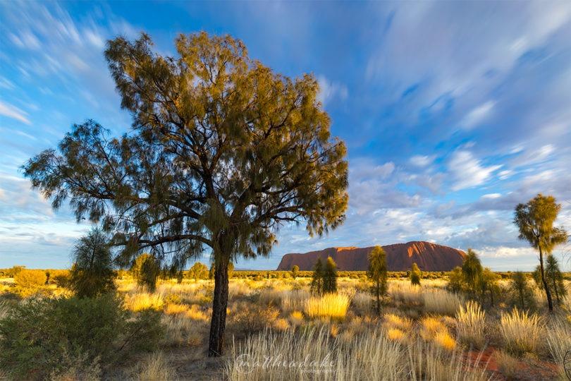 Ayres Rock Sunrise Tree Clouds Web