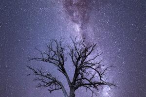 Milky Way Dead Tree Outback Australia landscape photograph