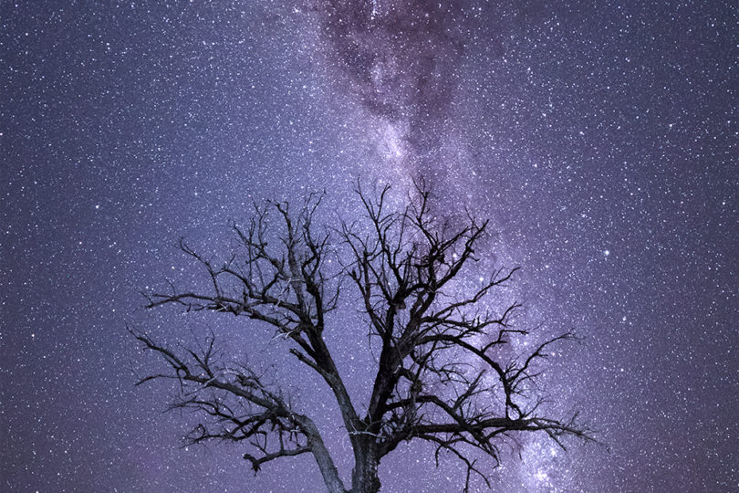 Milky Way Dead Tree Outback Australia landscape photograph